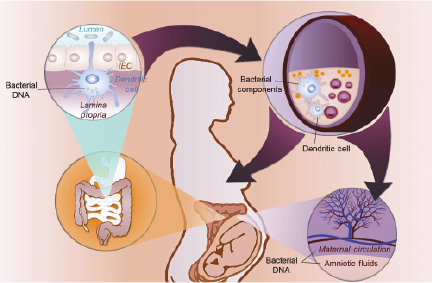 Transmission bactéries mère-enfant grossesse