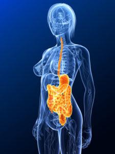 Bactéries dans nos intestins